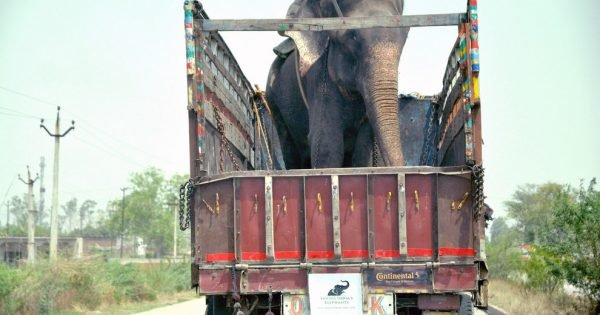 This Elephant Was Chained And Beaten For 50 Years. But Now He's Free And I'm Not The Only One Crying!