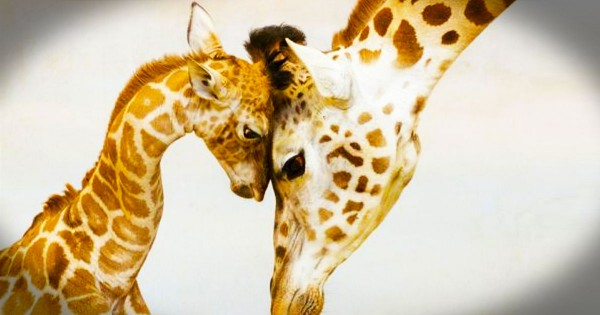 These 20 Animal Parents are Loving Their Babies. No. 19 Made Me Aaawww!