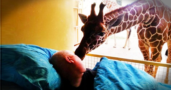 This Zoo Worker Knew His Days Were Numbered. His Final Wish Will Break Your Heart!
