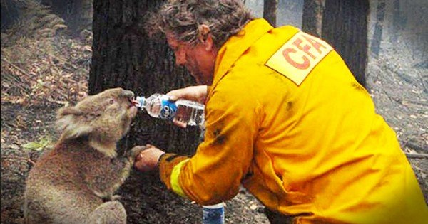 These 21 Acts of Kindness Towards Animals Are So Special… I Teared up When I Saw #16!