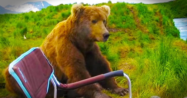 I Can't Believe What This Bear Just Did! My Mind Was Blown.