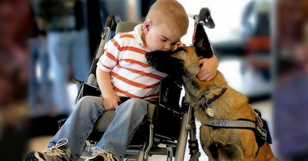 Dying Boy's Bond With a Dog Is Truly Heartbreaking