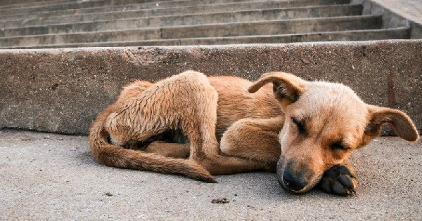 starving dog laying on sidewalk