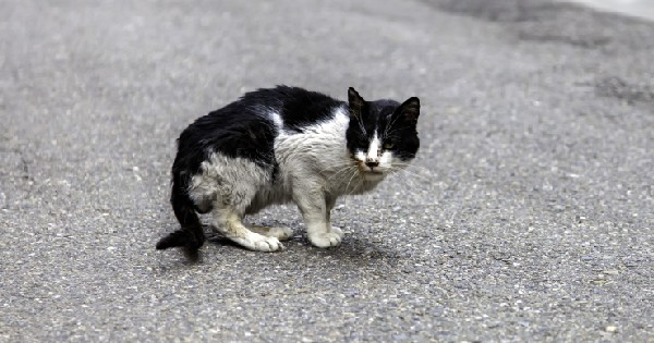 sick homeless cat on the street