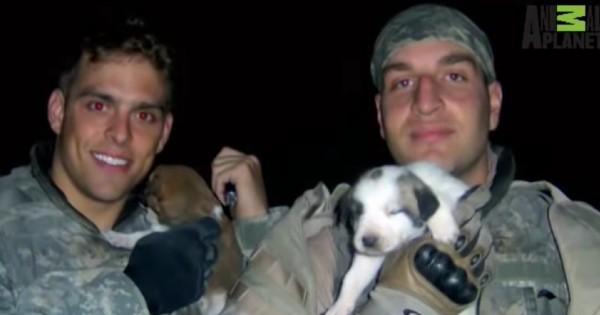 two soldiers holding puppies