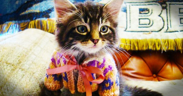 16 Animals In Cute Sweaters