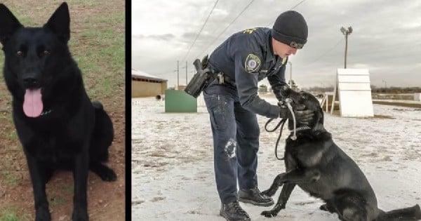 police officer rewarding his k-9 partner