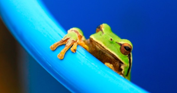 When This Frog Nearly Died, It Did Something That Didn't Just Save Its Own Life. It Could SAVE YOUR LIFE Too!