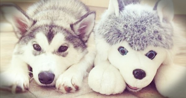 Real Animals With Their Stuffed Animal Twins