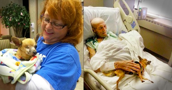 A Man and His Dog Were Dying Without Each Other. But When Nurses Broke The Rules A Miracle Happened!