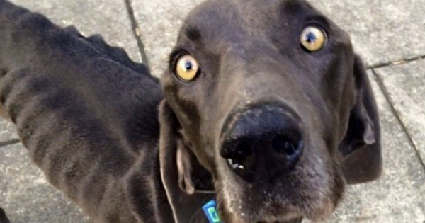 What This Dog Did To Survive Will SHOCK You. Thank God Someone Found This Poor Pup!