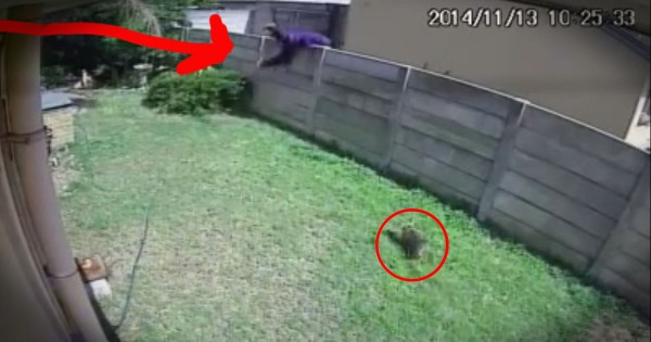 Yorkie Protects Home from Burglar