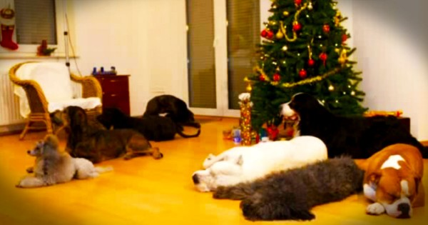 Doggy Christmas Surprise