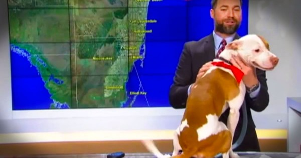 This Rescue Pup Just Made His Television Debut. And It's Got Me ROLLING On The Floor!