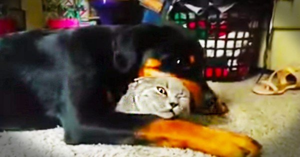 This Pup Knows He's Found His Best Friend. The Cat However…He's Not So Sure! LOL