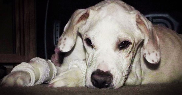What This Dog's 'Family' Did Was Shocking. But His 2nd Chance REALLY Made Me Sob!