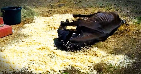 Horse Was Starved And Left For Dead Until Dramatic Rescue