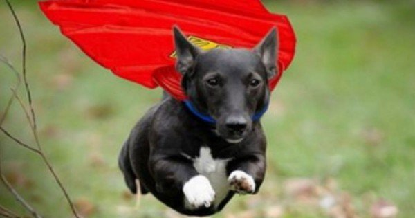 What Super Power Does You Pup Have? Take This Fun Quiz And Find Out. LOL
