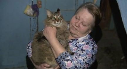Masha the cat 3