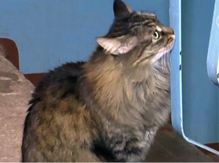 masha the cat 4