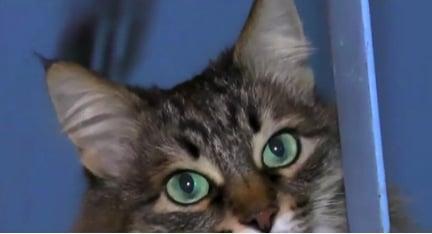 Masha the Cat 5