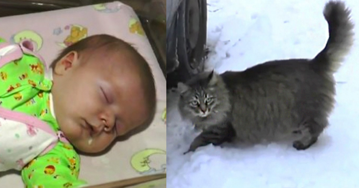 Masha the cat saves abandoned baby in russia