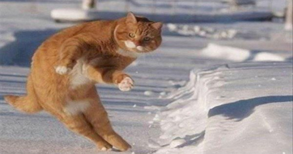 15 Animals Who Apparently Just Want To Dance