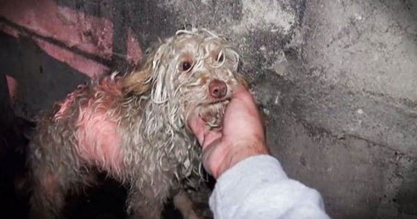 Puppy Living In A Sewer Tunnel Rescued By Hope For Paws