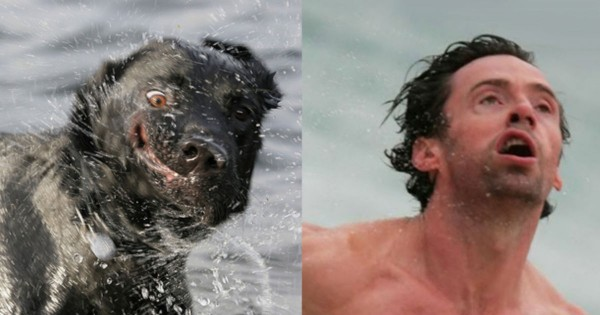 These 13 Wet Pups Look Awfully Familiar. And When YOU Find Out Why You'll CRACK UP!