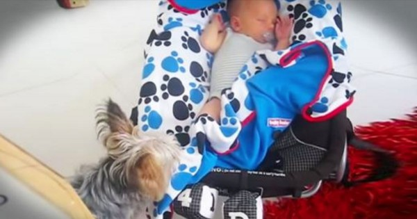 Apparently, This Baby Didn't Look Comfy Enough. What His Pup Did Next Is Truly A Heart-Melting Moment!