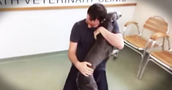 Dog That Was Stolen From His Home Is Reunited With His Owner