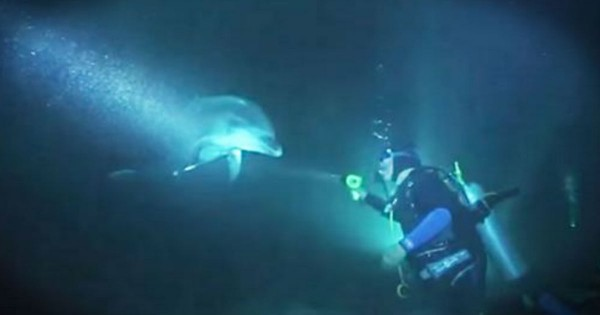 Dolphin Approached Diver For Help With The Fishing Line That Was Hooked On Her