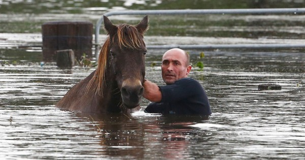 This MAN Just Risked His Life In A Deadly Flood. And It's All To Save Horses!