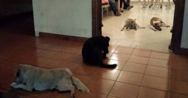 This Woman Dedicated Her Life To Helping Strays. And How They Said 'Thank You' Is The Sweetest!
