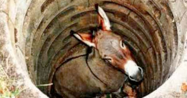 This Donkey Was In A Tough Spot. He Had Me Cheering For Him And He Never Gave Up!