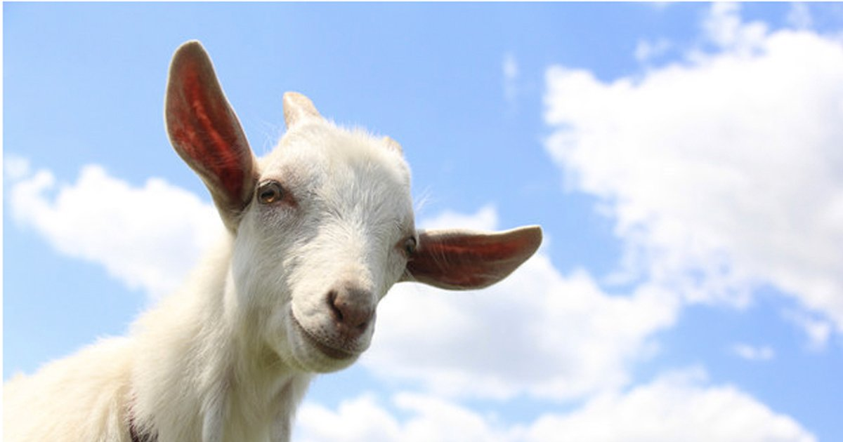inspirational goat quotes _ everything inspirational