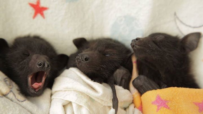 mj-godupdates-20-animal-babies-bats