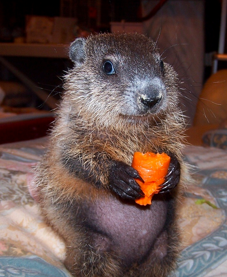 mj-godupdates-20-animal-babies-groundhog