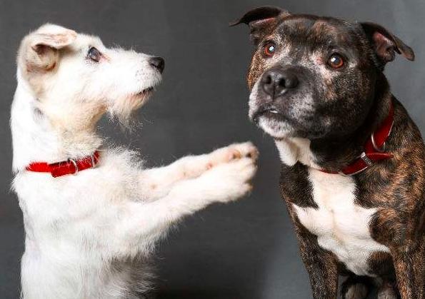 mj-godupdates-blind-dog-has-seeing-eye-dog-5