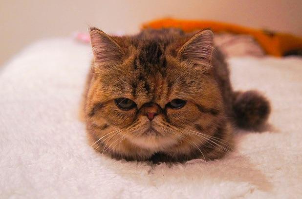 mj-godupdates-15-incredibly-cute-animal-photos-12