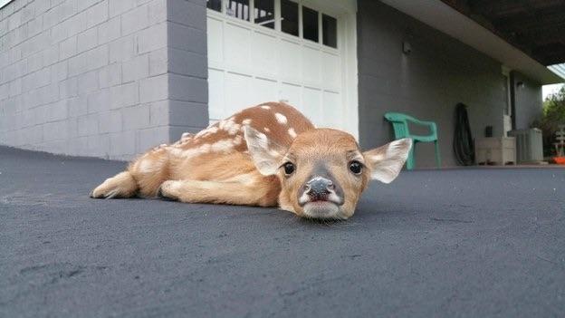 mj-godupdates-15-incredibly-cute-animal-photos-2