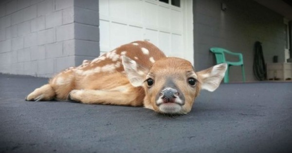 15 Animal Pictures So Cute You Won't Know Exactly What To Feel!