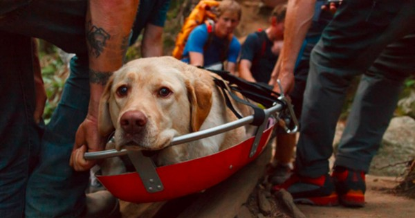 This Injured Dog Was Trapped. What These Heroes Did To Save Him — AWESOME!