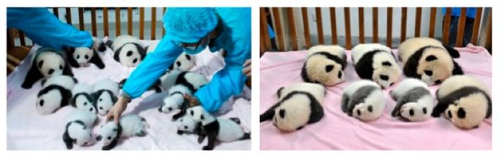 mj-godupdates-panda-daycare-1