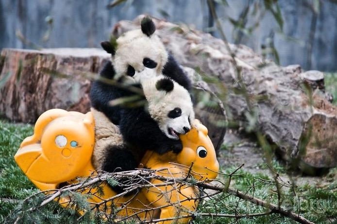 mj-godupdates-panda-daycare-10