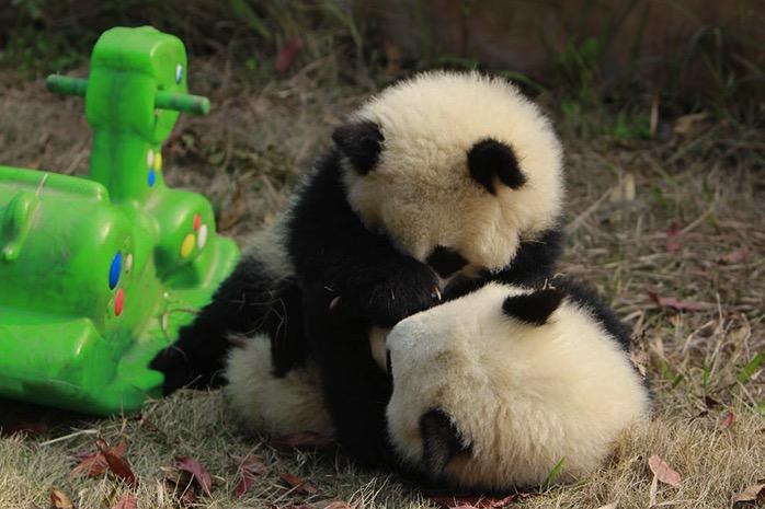 mj-godupdates-panda-daycare-12
