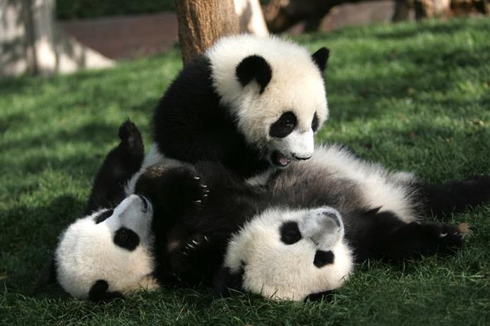 mj-godupdates-panda-daycare-13