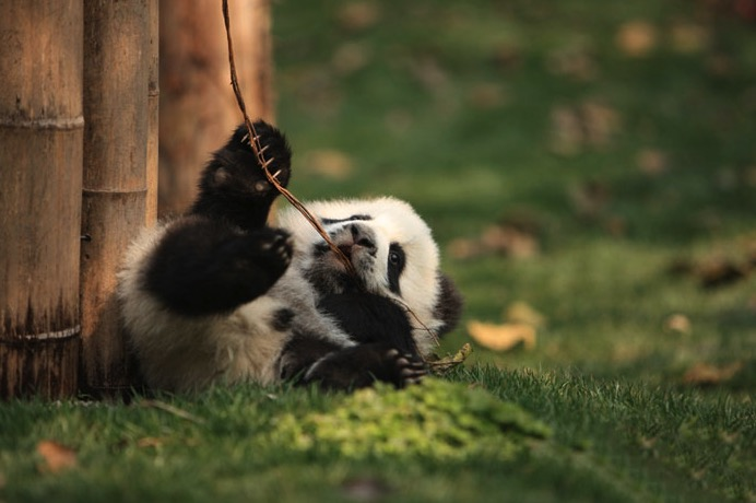 mj-godupdates-panda-daycare-14
