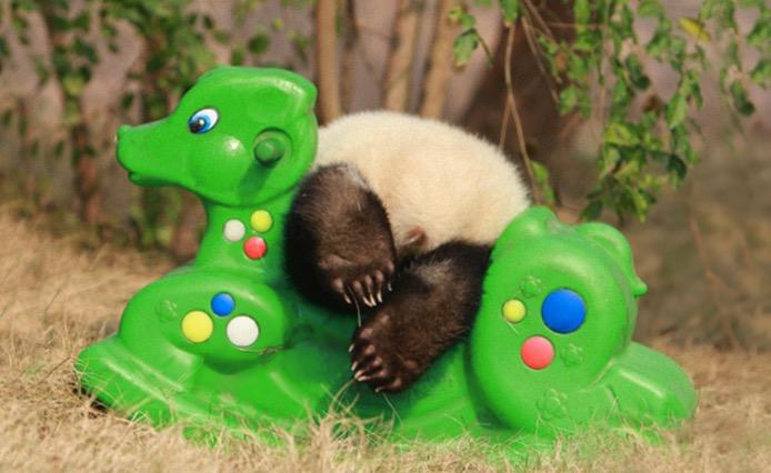 mj-godupdates-panda-daycare-15