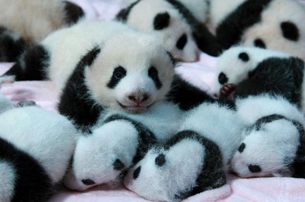 mj-godupdates-panda-daycare-2